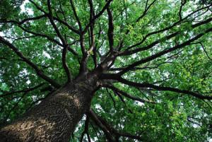 albero radiobussola