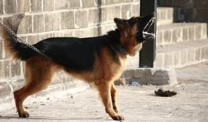 Cane, cani