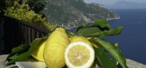 maiori-da-sorrento-ad-amalfi-il-progetto-integrato-limone