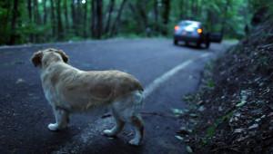 abbandono-cani-radiobussola