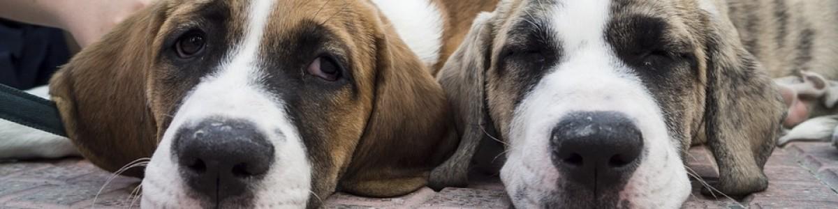 Nasce a Baronissi il primo dog park della città