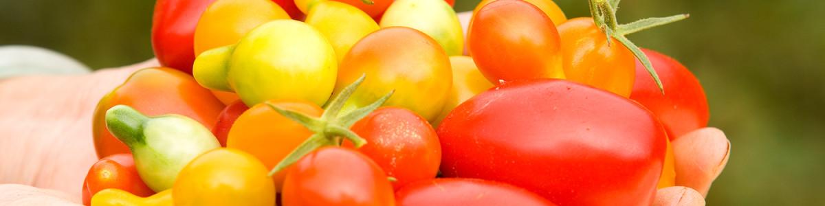 Festa del pomodoro ad Angri