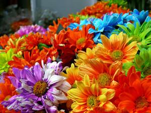 fiori-radiobussola