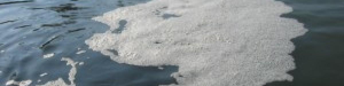 Sversamento di reflui zootecnici nel fiume: denunciata un'azienda di Capaccio Paestum