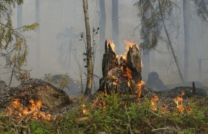 forest-fire-432877_960_720