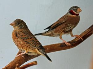 uccelli-radiobussola